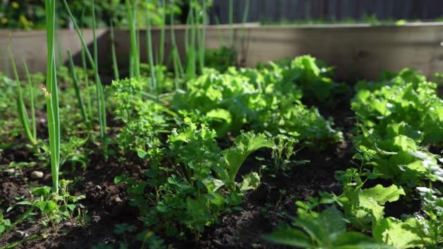 community garden - local produce stock videos & royalty-free footage
