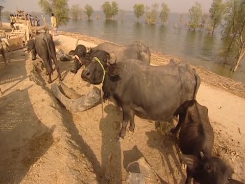a community is marooned on embankment following devastating pakistan floods - embankment stock videos and b-roll footage