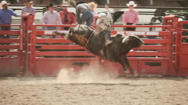 competition rodeo bull riding - bucking bronco stock videos & royalty-free footage