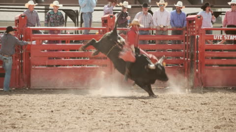 stockvideo's en b-roll-footage met competitie rodeo stier rijden - stier mannetjesdier