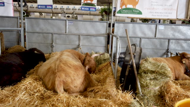 GBR: Preparations Are Made Ahead Of The Royal Highland Show