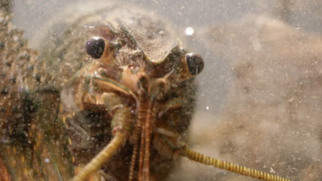 compilation of a crayfish moving underwater - swamp stock videos & royalty-free footage