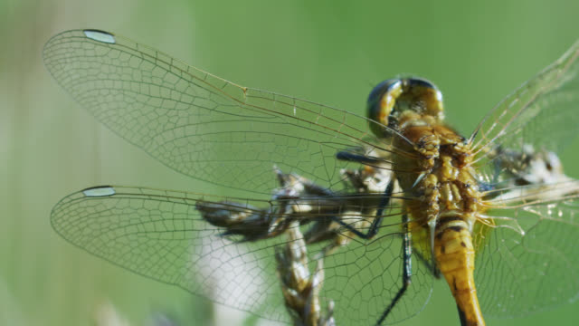 compilation of a dragonfly resting on the grass - wildlife stock videos & royalty-free footage