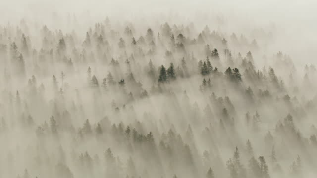compilation of a foggy forest at sunrise - yellowstone national park stock videos & royalty-free footage
