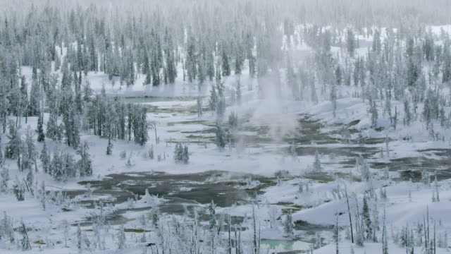 compilation of a geothermal area in the forest - yellowstone nationalpark stock-videos und b-roll-filmmaterial