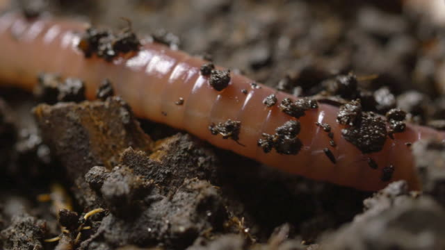 compilation of a worm moving through the dirt - river mississippi stock videos & royalty-free footage