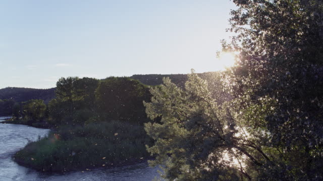 compilation of cottonwood seeds floating over the river - river yellowstone stock videos & royalty-free footage
