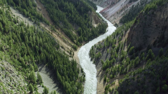 compilation of river valleys in the yellowstone national park - nadelbaum stock-videos und b-roll-filmmaterial