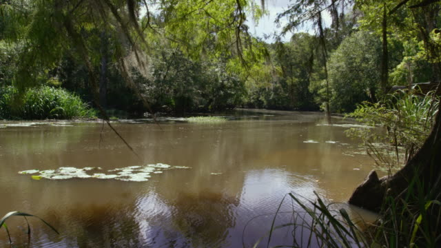 compilation of the bayou of the mississippi river - louisiana stock videos & royalty-free footage