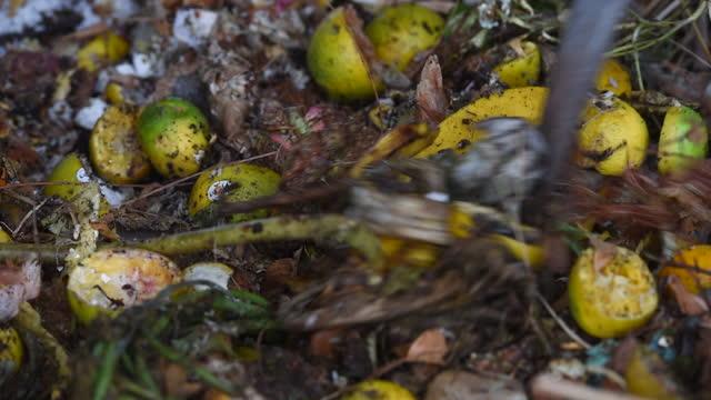 vídeos de stock, filmes e b-roll de compostagem - resíduos orgânicos em decomposição - depósito de lixo