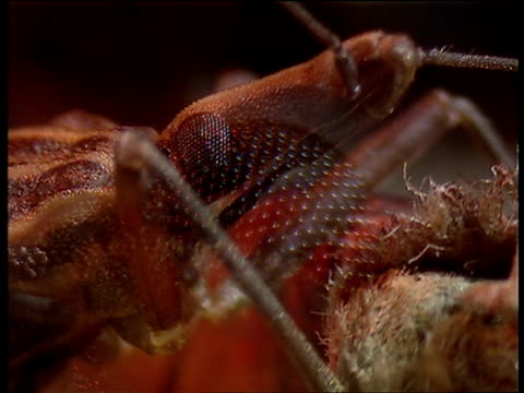 compound eye of assassin bug bug crawling over book uk - e book stock videos & royalty-free footage