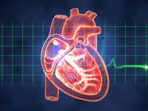 computer animated video clip of a pulse monitor superimposed over a heart and other body parts