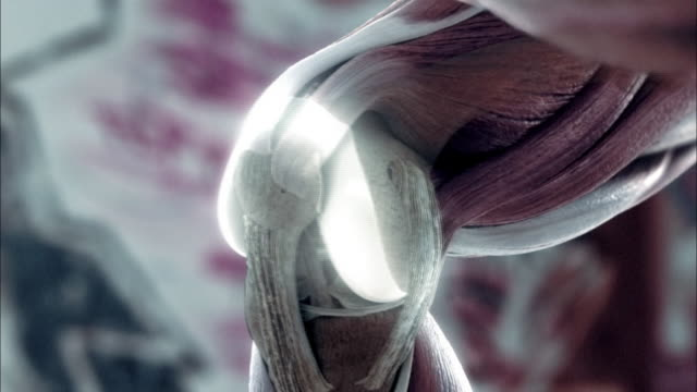 vídeos de stock e filmes b-roll de a computer animation depicts cartilage in the human body. - articulação humana