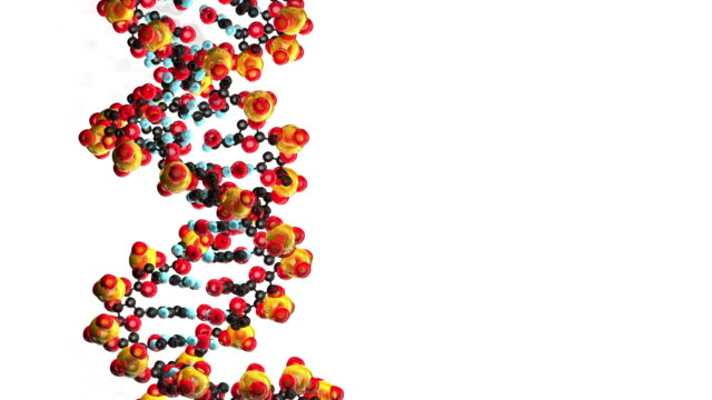 computer animation of dna. white background - helix model stock videos and b-roll footage