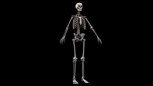 Computer animation of human skeleton. Rotating