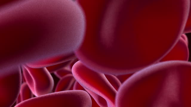 computer animation of red blood cells moving towards camera - human blood stock videos and b-roll footage