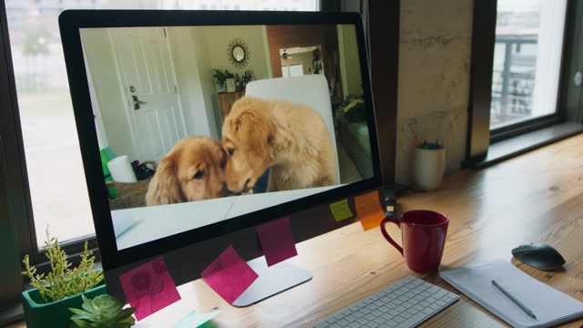 computer displays two adorable dogs looking at the screen - humour stock videos & royalty-free footage