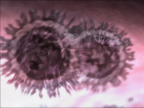 computer generated image gene splicing / two virus cells joining and exchanging rna / splitting apart - 2004 stock videos and b-roll footage