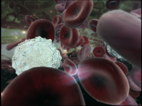 computer generated image hiv virus traveling through bloodstream - human cell stock videos & royalty-free footage