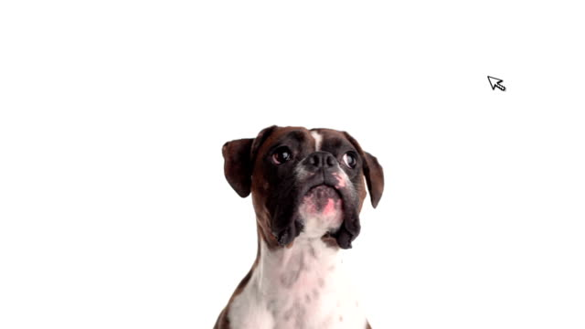computer mouse teases dog. - white background stock videos & royalty-free footage
