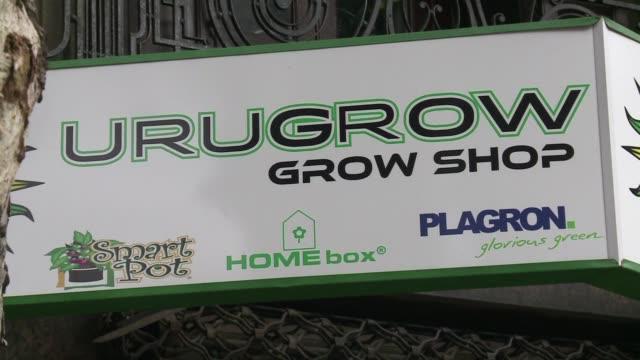 vídeos de stock e filmes b-roll de con la entrada en vigencia de la ley que regula el mercado de marihuana los cultivadores uruguayos se muestran cada vez mas pero ahora enfrentan el... - uruguai
