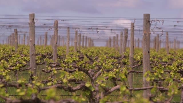 vídeos de stock, filmes e b-roll de con temperaturas que rompen records a punto de volverse la normalidad en australia el cuarto pais productor de vino del mundo el gobierno y los... - vino