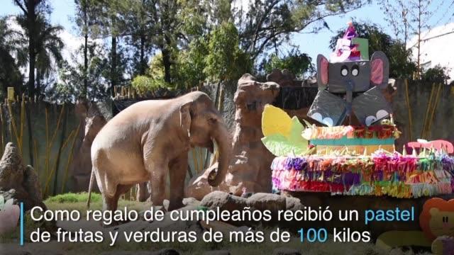 Con un pastel de 105 kilos hecho de vegetales un zoologico de Guatemala celebro los 57 anos de la elefanta Trompita
