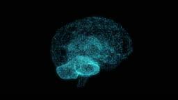 AI (Artificial Intelligence) concept. Human brain.