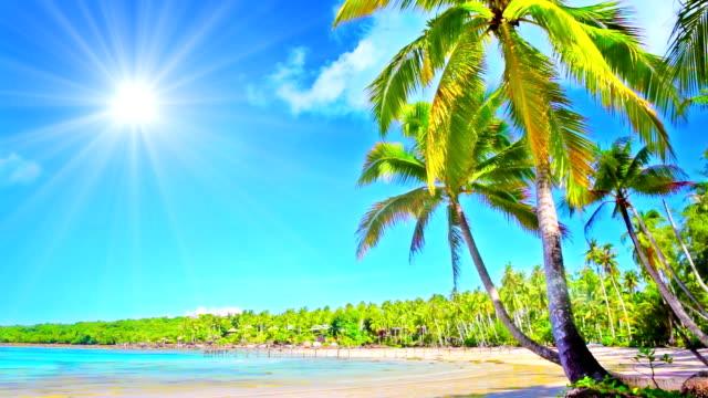 コンセプトの祝日。 - 熱帯気候点の映像素材/bロール