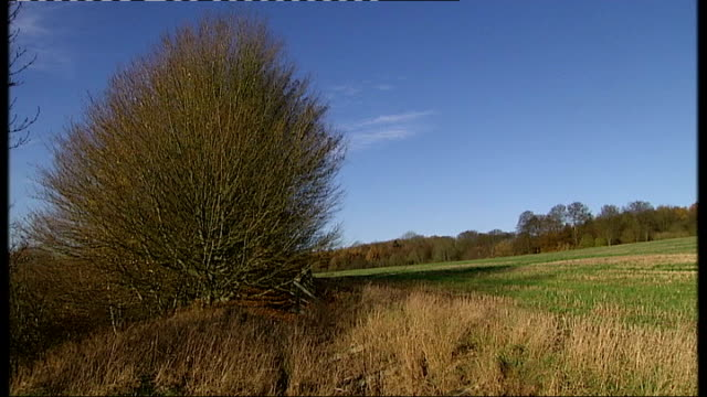 vidéos et rushes de concerns over environmental effects of hs2 t06121129 / north of amersham ext buckinghamshire countryside tree at edge of field countryside seen... - bare tree