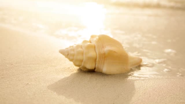 conch shell on sand at beach - single object stock videos & royalty-free footage
