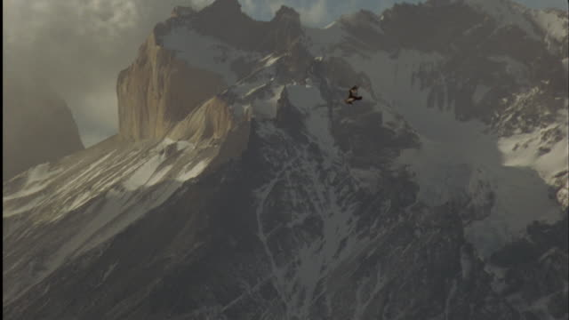 condor soars past mountains, south america available in hd. - contrasts stock videos and b-roll footage