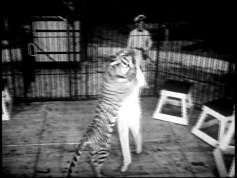 coney island - 7 of 9 - andere clips dieser aufnahmen anzeigen 2124 stock-videos und b-roll-filmmaterial