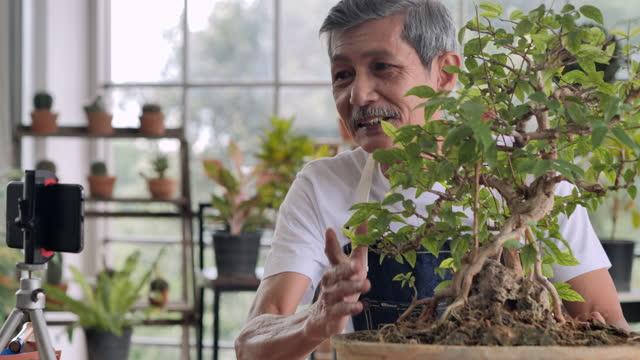 62歳の自信アジアの先輩男性がカメラの前で話すvlog。自宅のソーシャルメディアでライブストリーミングして販売用観葉植物を説明するビデオを録画しながらブロガーとして働く年配の男性� - 観葉植物点の映像素材/bロール