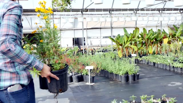confident female plant garden center employee arranges plants - pot plant stock videos and b-roll footage