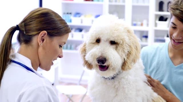 vidéos et rushes de confiant femme vétérinaire pose des questions de la propriétaire de l'animal chez les adolescentes sur son chien - propriétaire d'animal de compagnie