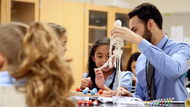 confident science teacher explains skeletal system to stem school students - elementary age stock videos & royalty-free footage