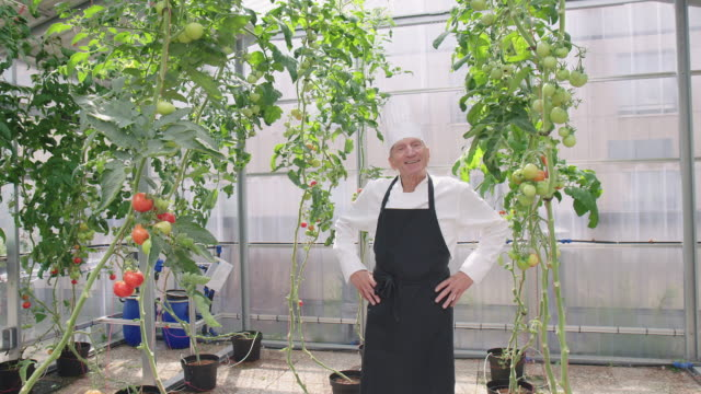 confident senior chef in his garden - chef's hat stock videos & royalty-free footage