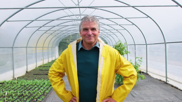 confident senior gardener in a greenhouse farm - mature men stock videos & royalty-free footage