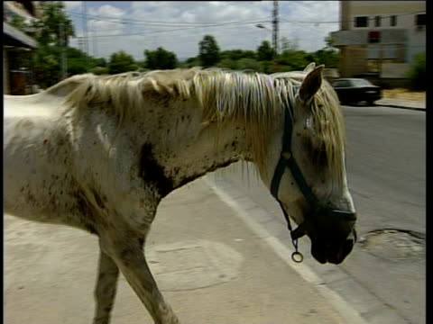 fighting continues: more israeli reservists troops travel to border; undernourished white horse along empty street - 3日目点の映像素材/bロール