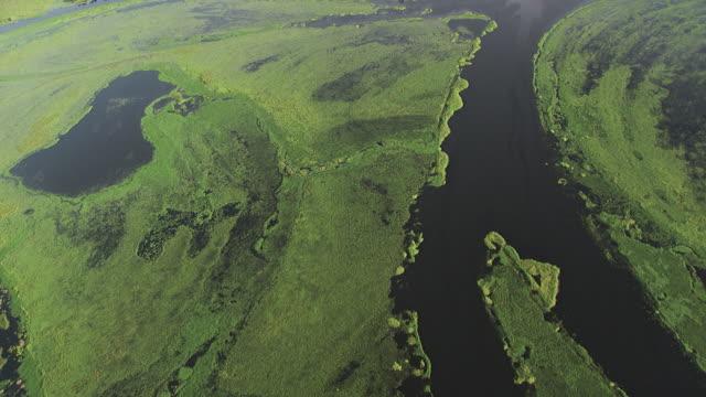 Congo: Likouala swamps