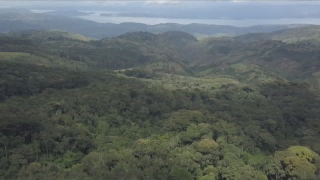 congolese rainforest - democratic republic of the congo stock videos & royalty-free footage
