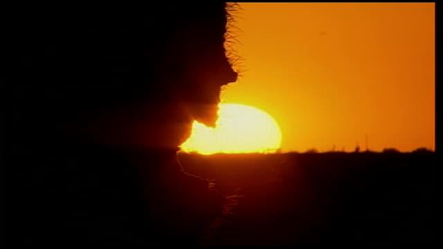 public opinion turns against republicans over iraq war arizona ext sun over desert cactii tilt up - arizona stock videos & royalty-free footage