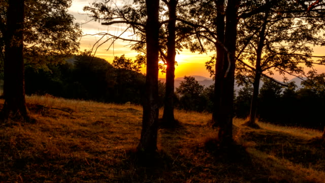 Coniferous forest at dawn, Time lapse 4k
