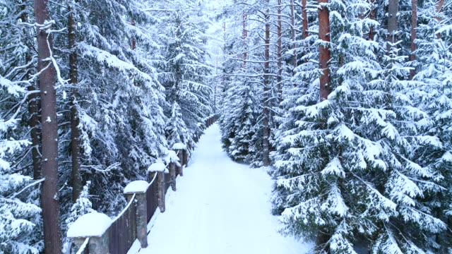 coniferous forest, fence and path in the snow. - deep snow stock videos & royalty-free footage