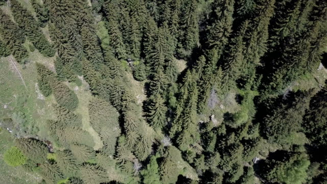 coniferous forest from above - named wilderness area stock videos & royalty-free footage