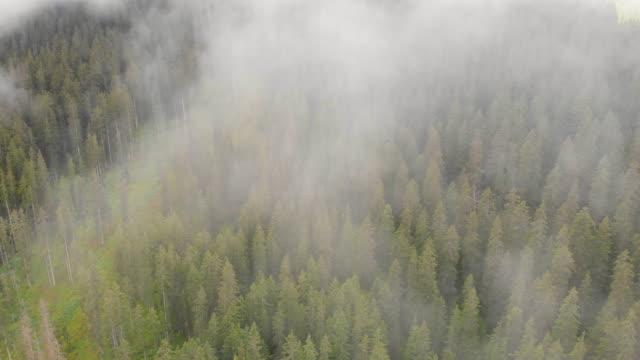Nadelwald trifft Wolken am Berg