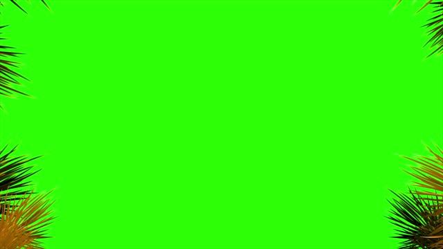 4k nadelbaumzweige und schneeflocken an den rändern des bildschirms auf grünem hintergrund - fairy lights stock-videos und b-roll-filmmaterial