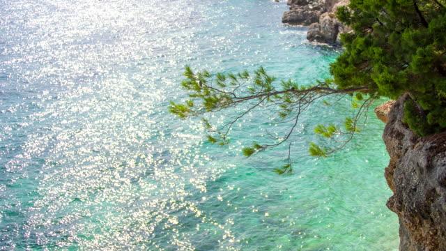 WS DS Nadelbaum wachsenden am Ufer