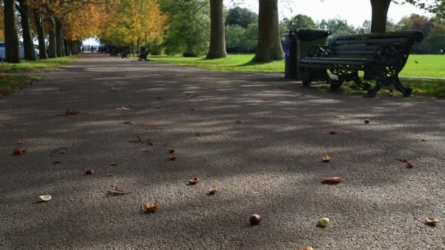 conker falls from a tree as autumnal weather comes to greenwich park on october 19, 2020 in london, england. experts are predicting a spectacular... - seed stock videos & royalty-free footage
